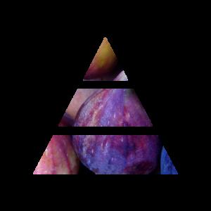 fragranza fig&rose piramide olfattiva my fragrances