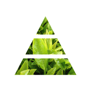 fragranza green tea piramide olfattiva my fragrances