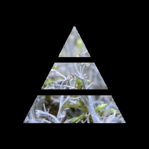 fragranza white musk piramide olfattiva my fragrances