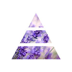 fragranza lavender&camomile piramide olfattiva my fragrances